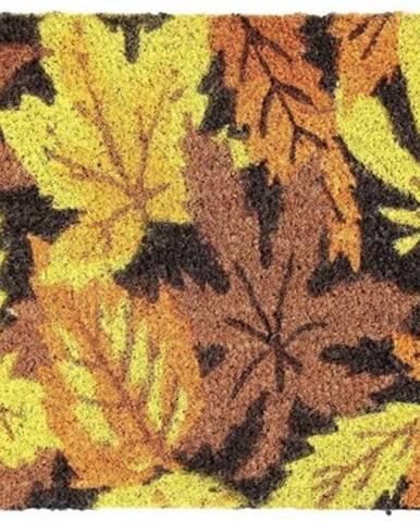 Kokosová rohožka listy
