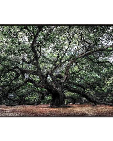 Monee OBRAZ SKLENĚNÝ, stromy, 120/80 cm - vícebarevná