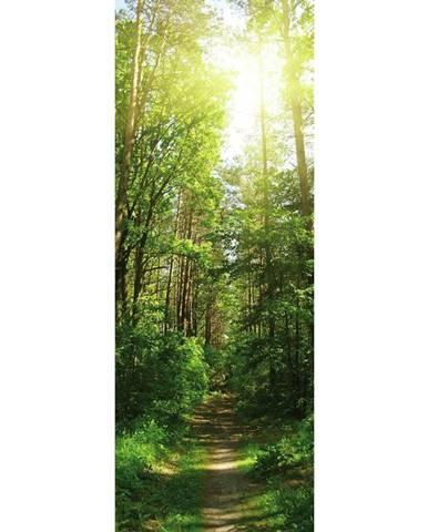 OBRAZ SKLENĚNÝ, krajina & příroda, 30/80/1,40 cm - vícebarevná