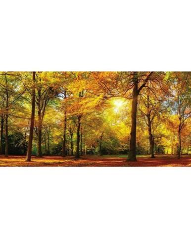 OBRAZ SKLENĚNÝ, krajina & příroda, 50/125 cm - vícebarevná